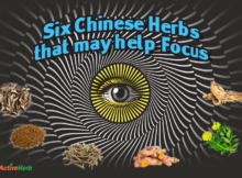 Chinese herbs to support cognitive function